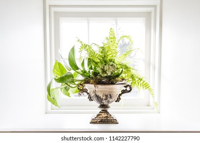 A potted plant sitting in a bright window.