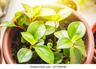 Potted plant and sunlight