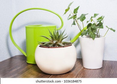 Potted plants in the office