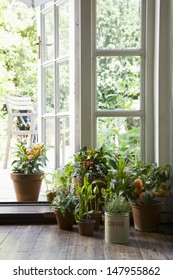 Potted plants on hardwood floor by open door in house