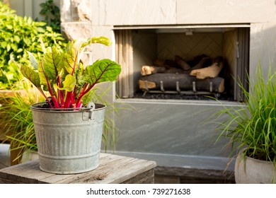 Potted plants on a patio with fireplace.