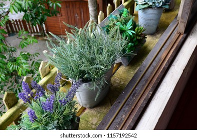 Potted plants on window frame