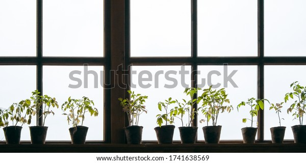 potted-plants-on-windowsill-light-600w-1