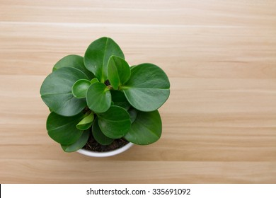 Potted plants on wooden desk