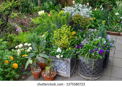 Potted plants in spring on a terrace