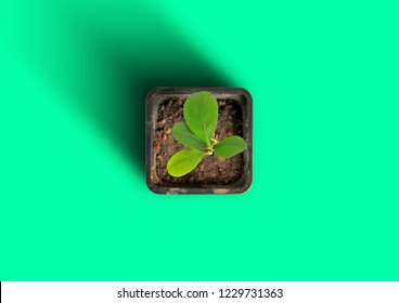 Potted small plant isolated on a green background, top view