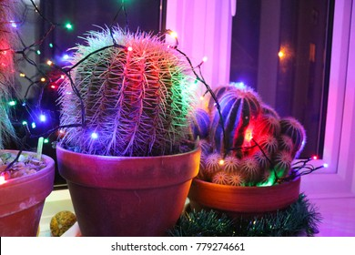 Potted spiky cacti in a window sill decorated with funky colored Christmas lights