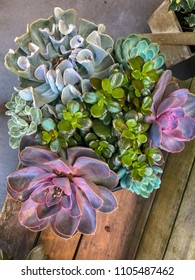 Potted succulents at a farmers market
