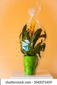 Potted Vriesea splendens flower as present