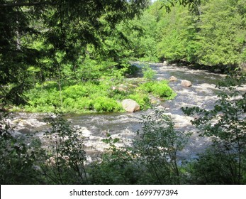 Pottersville, NY / USA - June  1, 2019: Tranquil stream in the lush Adirondack Mountain forest.