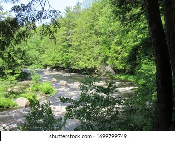 Pottersville, NY / USA - June  1, 2019:  Sunny summer day in lush Adirondack Mountain forest.