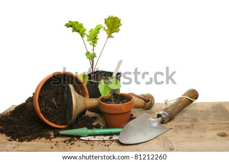 Marvelous Potting Vegetable Seedlings On Potting Bench Stock Image Gmtry Best Dining Table And Chair Ideas Images Gmtryco