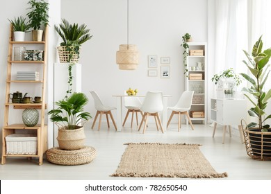 Pouf and brown rug near white cupboard in natural dining room interior with white chairs, plants and wooden shelves