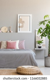 Pouf and plant next to grey bed with pink cushions in bedroom interior with poster. Real photo