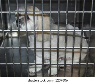 At the pound