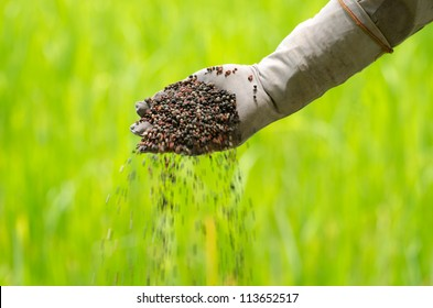 Pouring of chemical fertilizer on farmer hand over green background