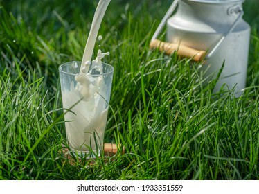 Pouring fresh milk into glass. Glass is on the green grass at sunny summer day.