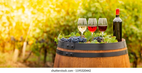 Pouring red wine into the glass, Barrel outdoor in Bordeaux Vineyard, France