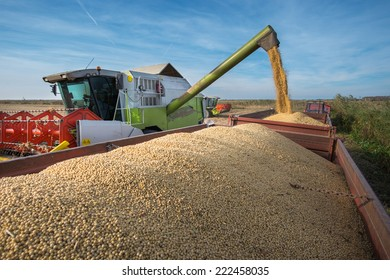 Pouring soy bean into tractor trailer
