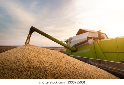 Pouring soy beans into tractor trailer