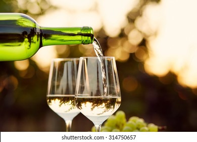 Pouring white wine into glasses in the vineyard, toned