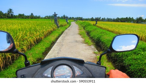POV frontal Point of View riding scooter / motorbike through bali rice fields