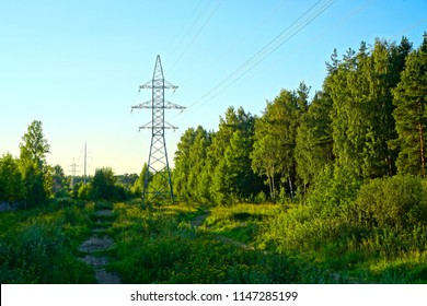 Power line in the forest.