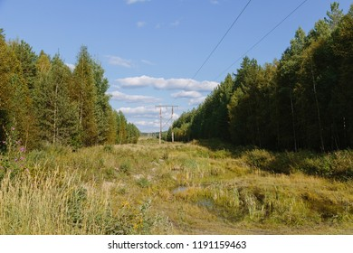 power lines in the forest