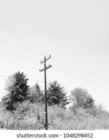 Power lines with frosty trees on a winter day in black and white.
