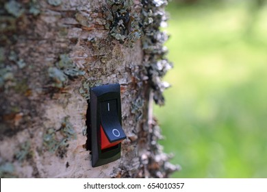 Power switch installed on birch tree. Concept of cleantech, conservation, green business and alternative energy. Green background.