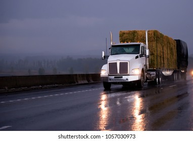 Powerful day cab big rig semi truck transporting pressed hay on two flat bed trailers driving by evening wet road in rainy weather with headlight reflection in twilight