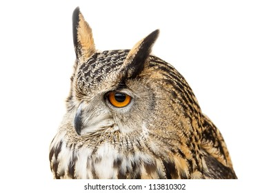 Powerful Eagle-Owl with big round eyes. Isolated on white background