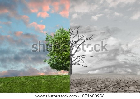 Powerful Image Tree Half Dead Half Stock Photo Edit Now 1071600956