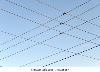 powerlines and poles against a blue sky looking up industrial electric