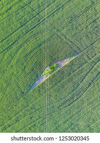 Powerlines running through a green field of wheat or barley.