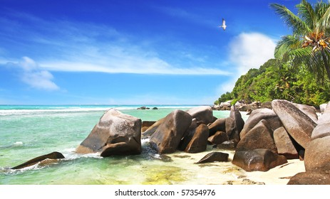 A pr of Sooty Terns the national Bird of the Seychelles  complete this idyllic scene on the Island of La Dique