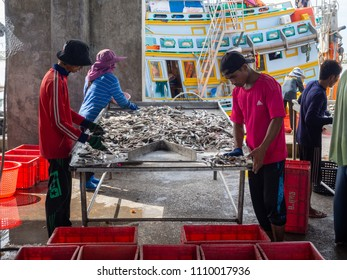 PRACHUAP KHIRI KHAN, THAILAND - JUNE 3, 2018 9.09 : Workers sorting the received fishes to sell to middleman or trader.