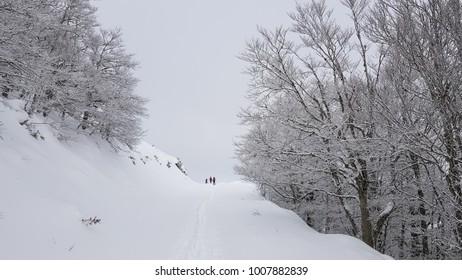 Practicing ski tour sport on the snowy landscape