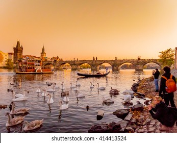 Prague Czech Republic 1 NOV 2015: Charles bridge or Karluv most crosses Vltava river in Prague, Czech Republic, connecting Prague Castle and city Old Town. Photography of swans swimming at sunset