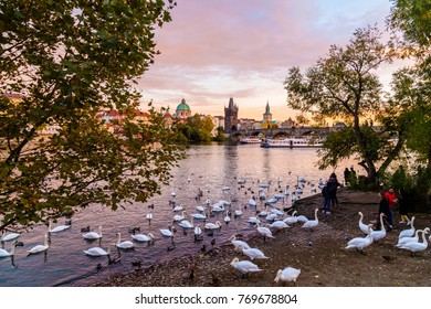PRAGUE, CZECH REPUBLIC - 11th October 2017:  A view of Charles Bridge and the Old Town from the Malá Strana side of the river. Large amounts of swans and some people can be seen.
