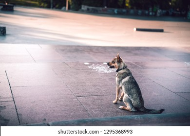 PRAGUE, CZECH REPUBLIC - 14.7.2016: Photo of the dog waiting and watching the people jumping on the skateboard on the Letna hill next to the old metronome. - Shutterstock ID 1295368993