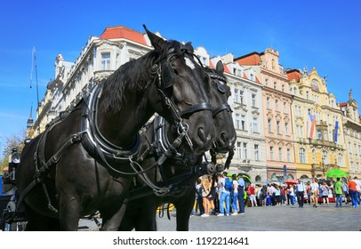 Prague, Czech Republic, September 18, 2018. Two black horses waiting to walk in the Old Town of Prague