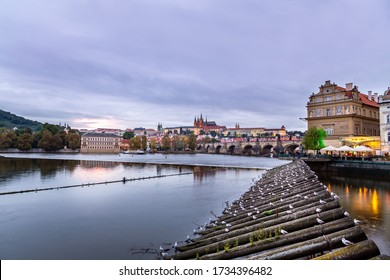 PRAGUE, CZECH REPUBLIC - SEPTEMBER 26, 2014: City view of water and skyline in Prague. Wooden log structure with many seagull birds in the foreground and incidental people, Prague September 26, 2014.