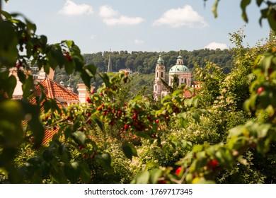 Prague Rooftops trough the bushes