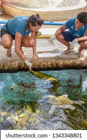 Praia do Forte, Brazil - 31 January 2019: woman who feeds moray and turtles on Project Tamar tank at Praia do Forte in Brazil