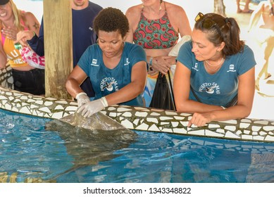 Praia do Forte, Brazil - 31 January 2019: woman who feeds the breed fish on Project Tamar tank at Praia do Forte in Brazil