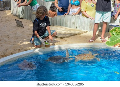Praia do Forte, Brazil - 31 January 2019: boy who feeds the turtles on Project Tamar tank at Praia do Forte in Brazil