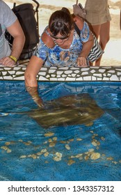 Praia do Forte, Brazil - 31 January 2019: woman caressing breed fish on Project Tamar tank at Praia do Forte in Brazil