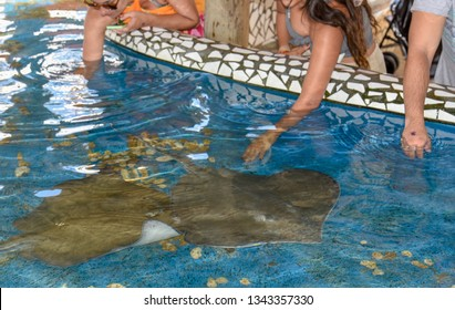 Praia do Forte, Brazil - 31 January 2019: people caressing breed fish on Project Tamar tank at Praia do Forte in Brazil
