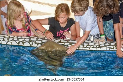 Praia do Forte, Brazil - 31 January 2019: children caressing breed fish on Project Tamar tank at Praia do Forte in Brazil